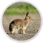 Cottontail Rabbit Stony Brook New York Round Beach Towel