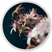 Round Beach Towel featuring the photograph Crassula Ovata Flowers And Honey Bee  by Sharon Mau