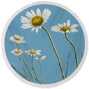 Daisies In The Wind Round Beach Towel