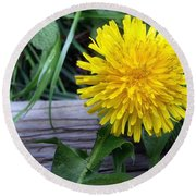 Round Beach Towel featuring the photograph Dandelion by Robert Knight