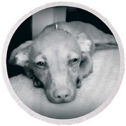 Day Dreaming Doxie Round Beach Towel