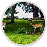 Deer In The Park Round Beach Towel