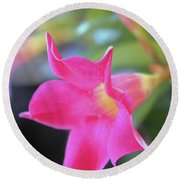 Round Beach Towel featuring the photograph Dipladenia by Victor K