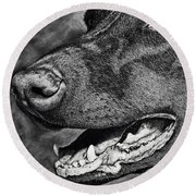 Doberman Face Round Beach Towel by Terri Mills