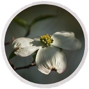 Dogwood Bloom Round Beach Towel