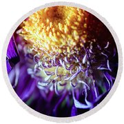 Dying Purple Chrysanthemum Flower Background Round Beach Towel
