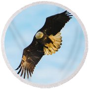 Eagle Stare Down Round Beach Towel by Jeff at JSJ Photography