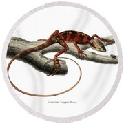 Round Beach Towel featuring the drawing Eastern Casquehead Iguana, Laemanctus Longipes by Carl Wilhelm Pohlke