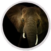 Elephant Against Black Background Round Beach Towel
