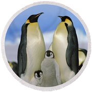 Emperor Penguin Family Round Beach Towel