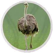 Emu Round Beach Towel