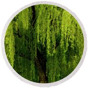 Enchanting Weeping Willow Tree  Round Beach Towel