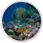 Exquisite Butterflyfish In The Red Sea Round Beach Towel