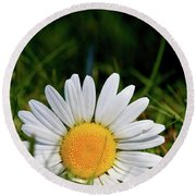Round Beach Towel featuring the photograph Fallen Daisy by Scott Holmes