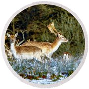 Fallow Deer In England Round Beach Towel