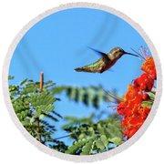 Feeding  Anna's Hummingbird Round Beach Towel by Robert Bales