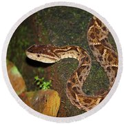 Round Beach Towel featuring the photograph Fer-de-lance, Bothrops Asper by Breck Bartholomew