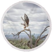 Ferruginous Hawk Round Beach Towel by Tam Ryan