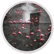 Round Beach Towel featuring the photograph Flamingo by Setsiri Silapasuwanchai