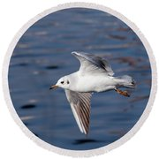 Flying Gull Above Water Round Beach Towel by Michal Boubin