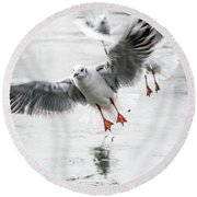 Flying Seagulls Round Beach Towel