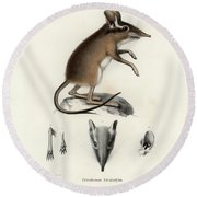 Round Beach Towel featuring the drawing Four-toed Elephant Shrew by J D L Franz Wagner