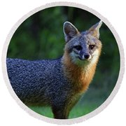 Fox Round Beach Towel