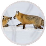 Round Beach Towel featuring the photograph Fox Love by Brenda Jacobs