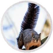 Round Beach Towel featuring the photograph Fox Squirrel On Alert by Onyonet  Photo Studios