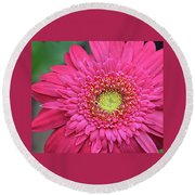 Gerbera Daisy Round Beach Towel by Ronda Ryan