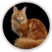 Ginger Maine Coon Cat Isolated On Black Background Round Beach Towel