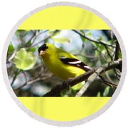 Goldfinch Spring Round Beach Towel