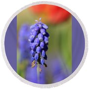 Round Beach Towel featuring the photograph Grape Hyacinth by Chris Berry
