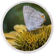 Gray Hairstreak Butterfly Round Beach Towel