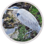 Round Beach Towel featuring the photograph Great Blue Heron by AJ Schibig