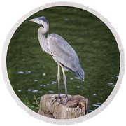 Round Beach Towel featuring the photograph Great Blue Heron by Gary Hall