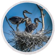Great Blue Heron On Nest Round Beach Towel