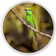 Green Bee-eater Round Beach Towel