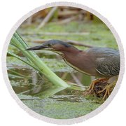 Round Beach Towel featuring the photograph Green Heron by Doug Herr