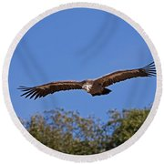 Griffon Vulture Gyps Fulvus Round Beach Towel
