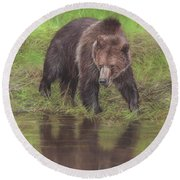 Grizzly Bear At Water's Edge Round Beach Towel