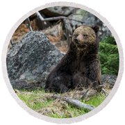 Grizzly Manor Round Beach Towel