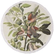 Ground Dove Round Beach Towel by John James Audubon