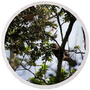 Young Hawaiian Hawk  Round Beach Towel