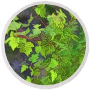 Hawthorn Leaves In Green Round Beach Towel