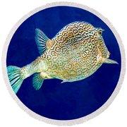Round Beach Towel featuring the photograph Honeycomb Cowfish by Perla Copernik