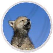 Howling Wolf Cub Round Beach Towel