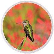 Hummingbird #5 Round Beach Towel