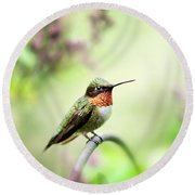 Round Beach Towel featuring the photograph Hummingbird II by Christina Rollo