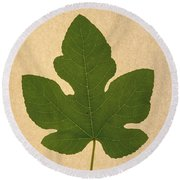 Round Beach Towel featuring the photograph Italian Honey Fig Leaf by Frank Wilson